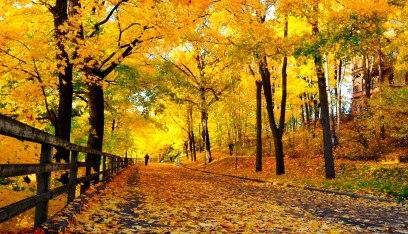 gorgeous yellow gold
