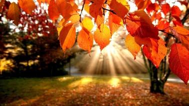 leaves in sun